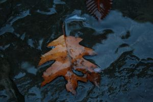 Falling Leaves by motorhead79