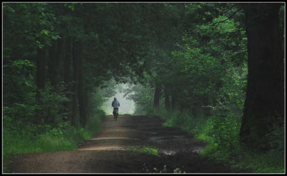 Cycling in the hazy forest by jchanders