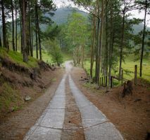 The road to Cerro Chato by DTherien