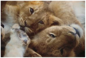 Lion Cubs by TheTundraGhost