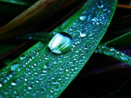 Lushious Water Grass by Golly-Gosh