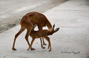 The Love Of A Mother.. by Hestefotograf