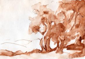 ink drawing study by CD8521