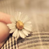 Pretty little things by Sweet-Nature