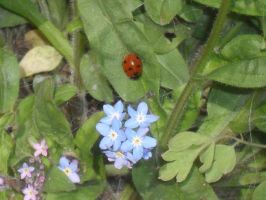blue flower and ladybird by KezXxX