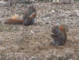You`ve got to love squirrels... by Cainamoon