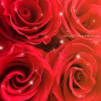 Four Roses by Cat-Mist