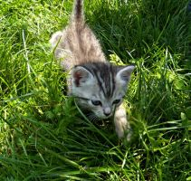 baby cat by lisans