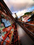 Exploring the Urban Jungle by FireflyPhotosAust
