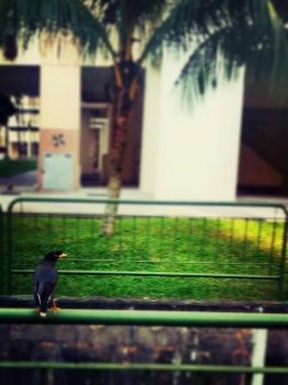 iPhoneography: Birdwatcher by myboo