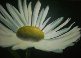 delicate daisy by ellie1980