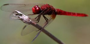 Dragonfly III by twisteDtenDerness