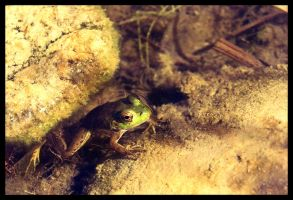 frog_01 by fuamnach