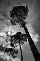 The Tall Trees by AbstractPotential
