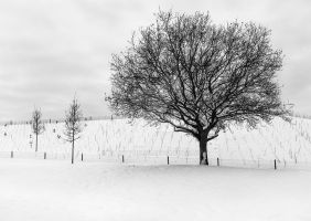 Winter Trees by mandydboss