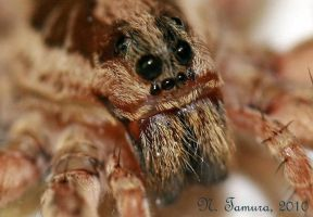 Eyes of the spider by NTamura