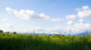 A Beautiful Field On A Beautiful Day by Xiox231