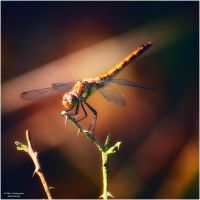 Little Creatures 056 by Frank-Beer