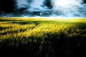 Field by FlowGraphic