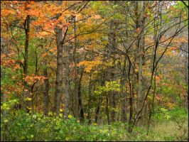 Busey Woods 902 by devianb