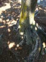 Tree Trunk by kwuus
