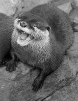 Laughing Otter by SteffiSTEREO