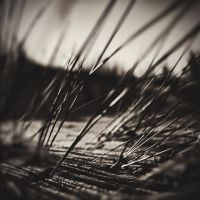 Like reeds in the wind by fabriziotedde