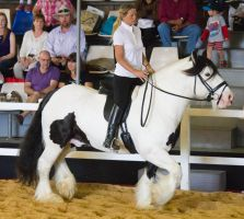 STOCK - 2014 Total Equine Expo-60 by fillyrox