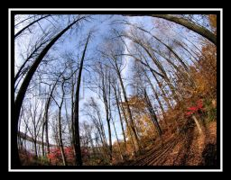 Fall Illusion 2 by lehPhotography