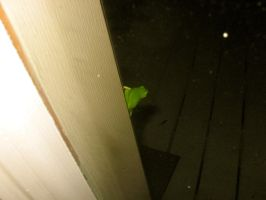Tree Frog by absoluteandrew