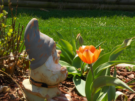 Gnome and the Tulip by DancingCookie