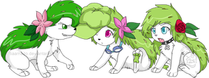 maito's shaymins by mr-tiaa