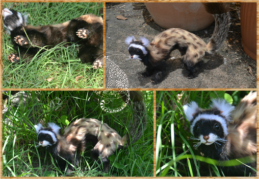 Marbled Polecat by Moon-Leopard-Designs