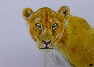 Lioness (ACEO) by Actlikenaturedoes