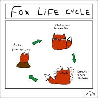 Fox Life Cycle by shioneh
