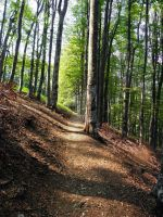 Forest path by valsomir
