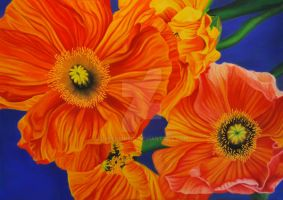 Mohn III by GreenMusic