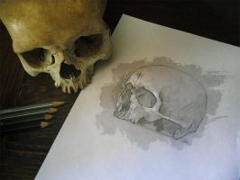 Skull Study Drawing | Practice by NaamahVonhell