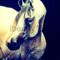 Arabian Stallion by ibeany13