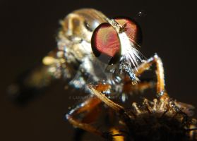 Robber Fly Macro 3 by Larah88