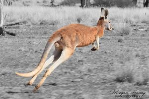 Aussie Red by OutbackReality