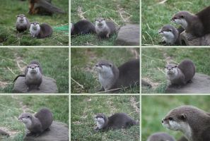Otters - Deer Park 1 by Tasastock