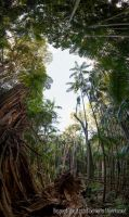 Forest Giants of Mt Tamborine Qld - 2 by Colin-LOCP