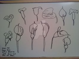 calla lillies 1 by Smidy3