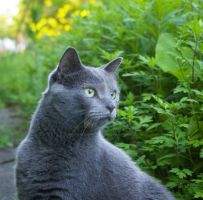 Grey Cat.3 by MargaretAntillPhotos