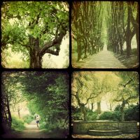 green by skinship