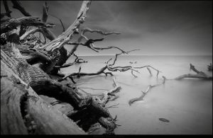 The Lengths at Tree Beach 1 by Enkased