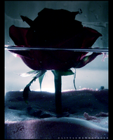Drowning Rose by littlemewhatever