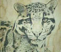 clowded leopard by BombPressure