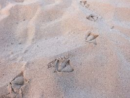 footprints by pixi5